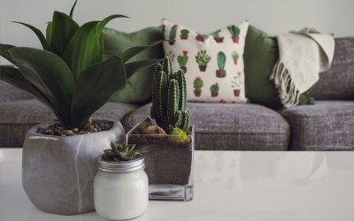 Populære planter til stuen